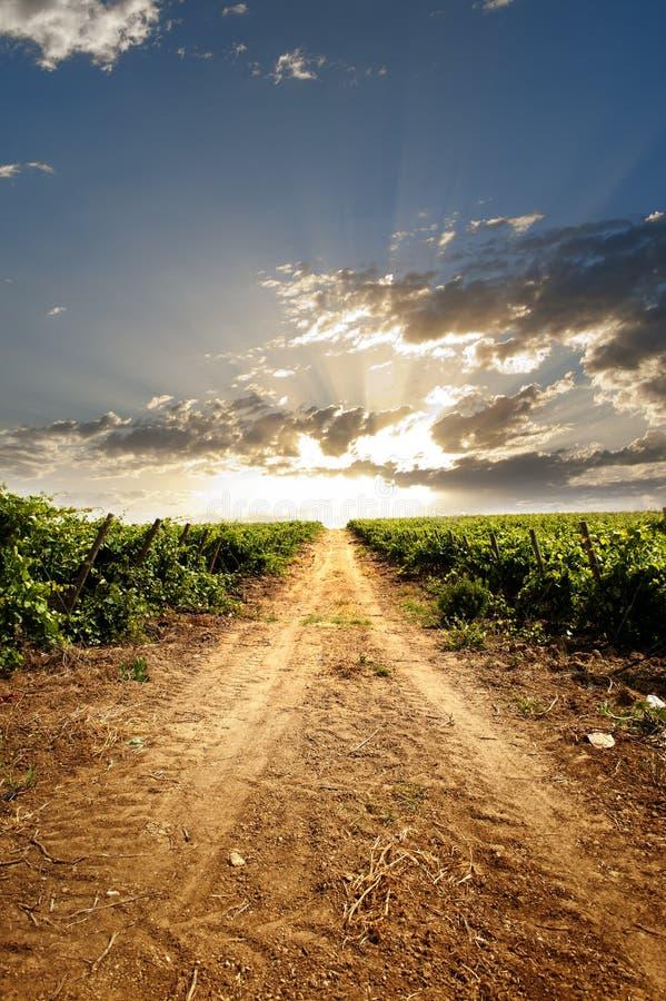 Dramatic vineyard