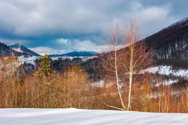 Dramatic winter landscape in mountains. Leafless birch forest on a snowy slope in sun light. distant mountains in shade of a cloud royalty free stock images