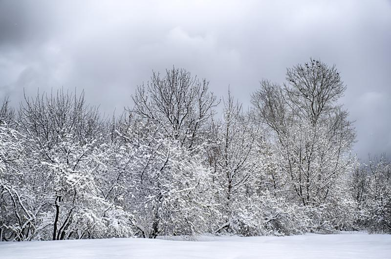 Dramatic winter snow landscape forest snow on branches vignetting hdr photo. Dramatic winter snow landscape forest snow on branches vignetting hdr stock image