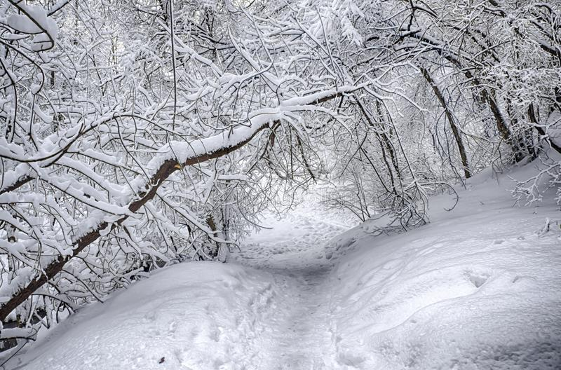 Dramatic winter snow landscape forest snow on branches vignetting hdr photo. Dramatic winter snow landscape forest snow on branches vignetting hdr royalty free stock images