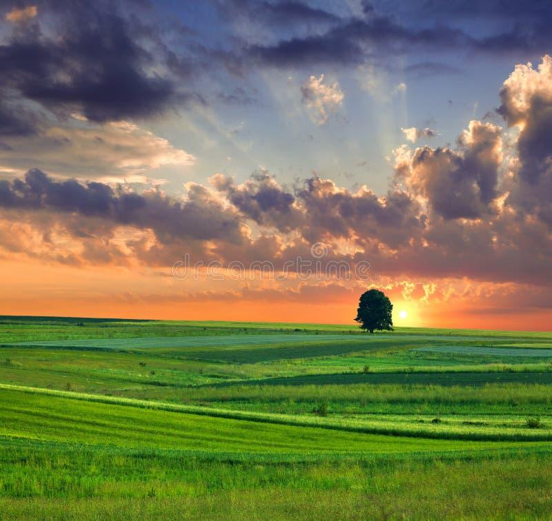 Dramatical summer landscape stock photos