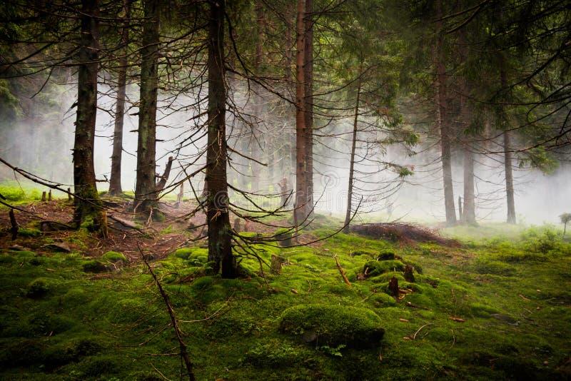 Dramatisch Bos met Mist royalty-vrije stock afbeeldingen