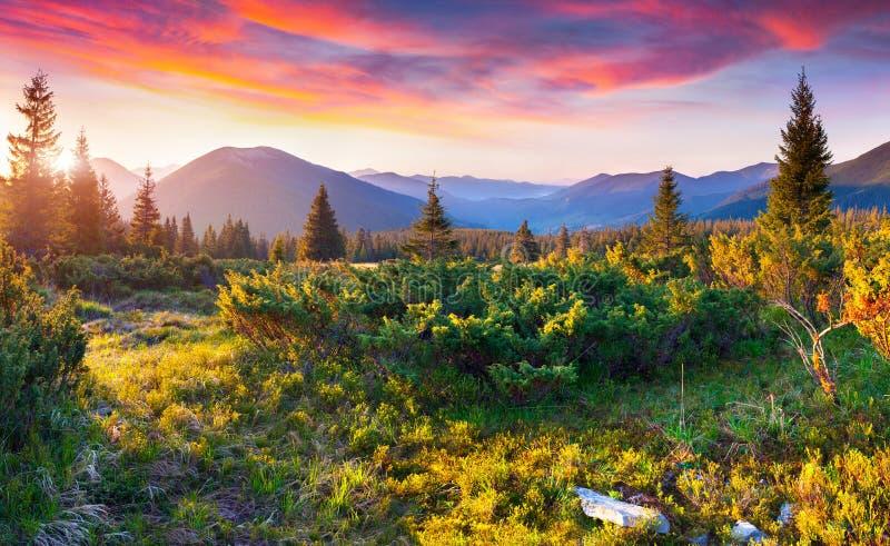 Dramatische de zomerzonsondergang in Karpatische bergen royalty-vrije stock afbeelding