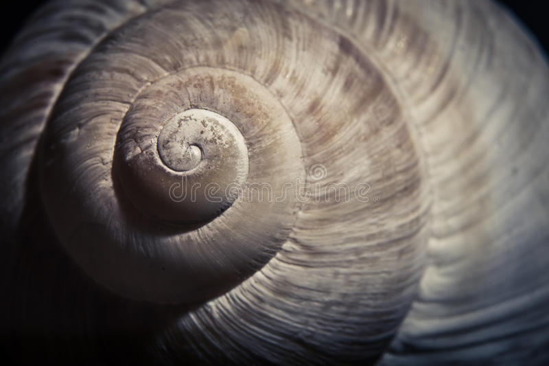 Dramatische dichte omhooggaand van spiraalvormige shell, royalty-vrije stock foto's