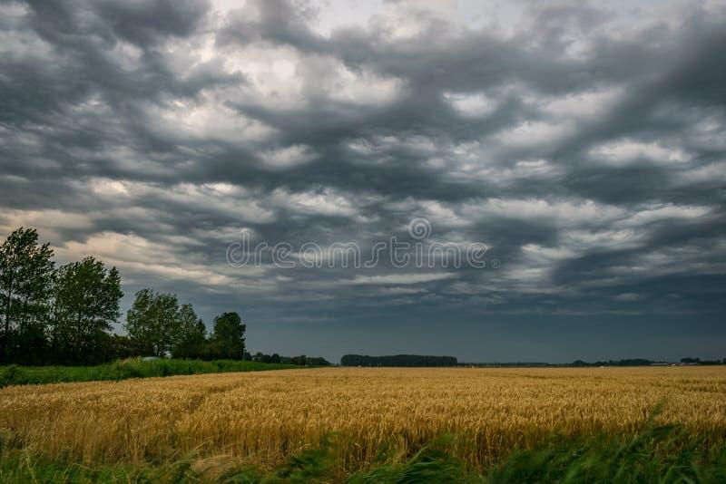 Dramatische dreigende hemel over Zeeland, Nederland stock afbeeldingen