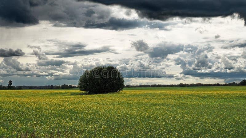 Dramatische hunder wolken Ñ 'over groene gebieden stock foto