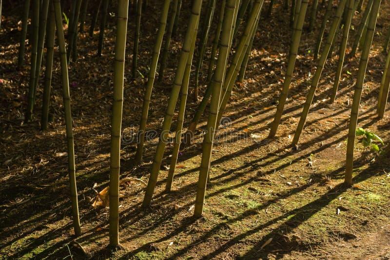 Dramatische schaduwen in bamboebos (2) royalty-vrije stock foto's
