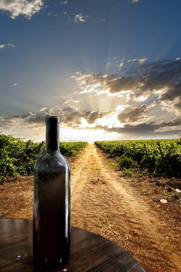 Dramatische wijngaard royalty-vrije stock fotografie
