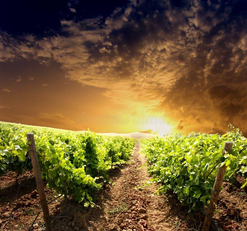 Dramatische wijngaard royalty-vrije stock afbeelding