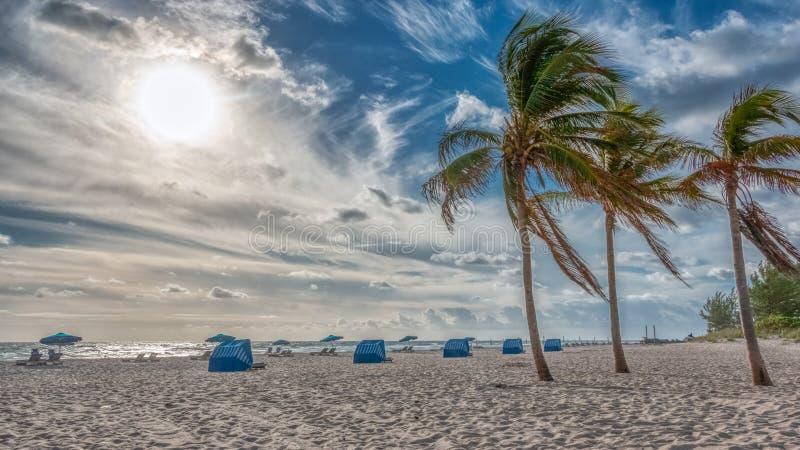 Dramatische wolken en van windslagen palmen bij strand in Florida stock afbeelding