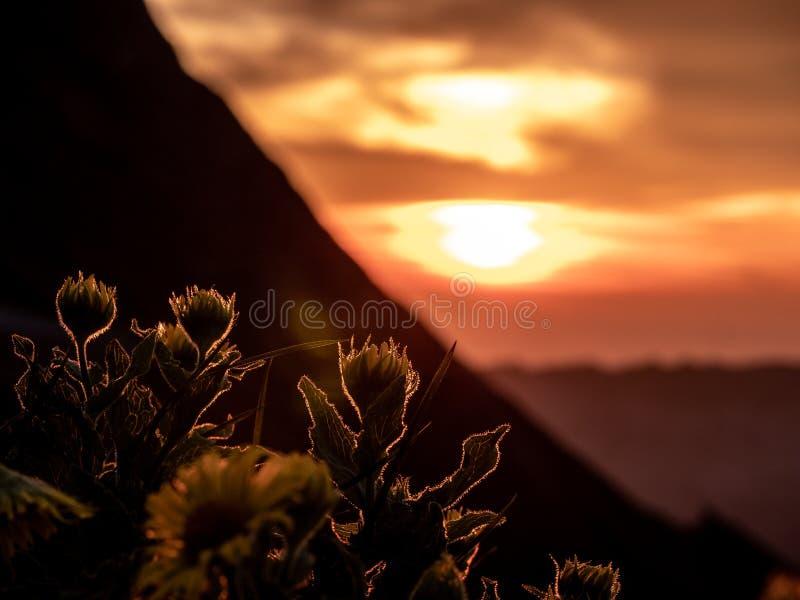 dramatische zonsondergang achter bloemen, silhouet van bloemen met de zomer gouden zonsondergang die bij bloemen glanzen royalty-vrije stock afbeeldingen