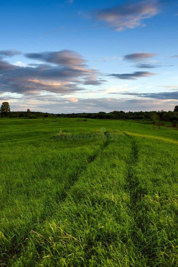 Dramatische zonsondergang op het de zomergebied royalty-vrije stock afbeelding