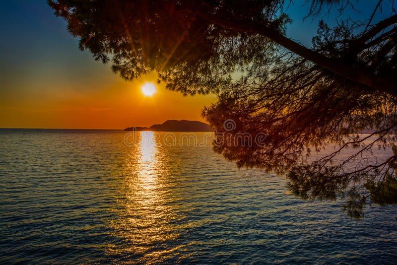 Dramatische zonsondergang over het overzees en de pijnboom branchs stock foto