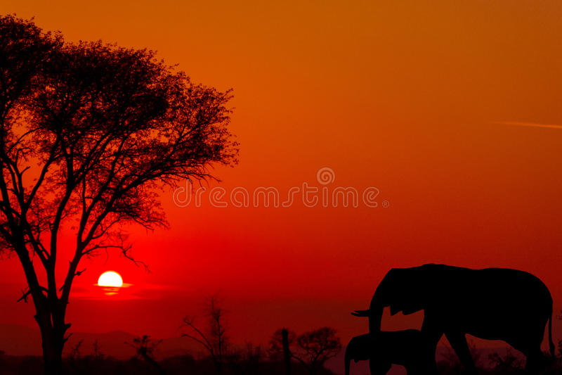 Dramatisk solnedgång i den Kruger nationalparken Sydafrika royaltyfria foton