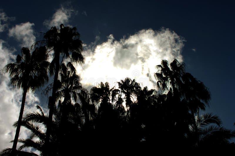 Dramatisk tropisk natthimmel med konturn av gömma i handflatan mot en mörk himmel med stormiga moln fotografering för bildbyråer
