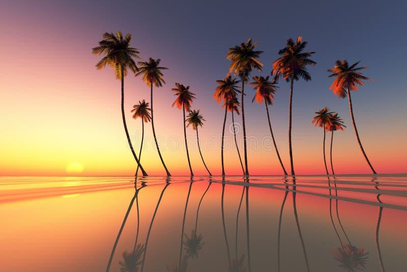 Dramatisk tropisk solnedgång royaltyfria foton