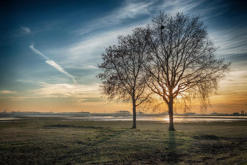 Dramatiskt färgat lantligt landskap med sil för två avlövad träd royaltyfri foto