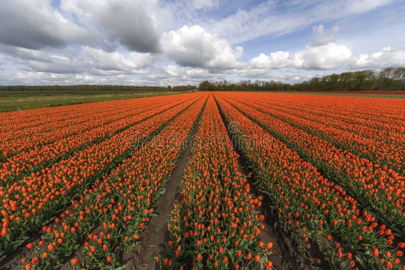 Dramatyczna Holenderska narta obraz royalty free