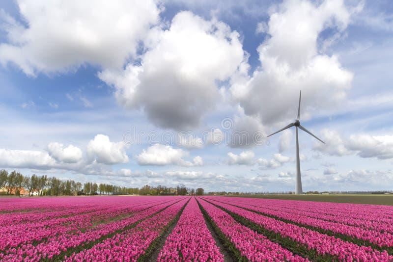Dramatyczna Holenderska narta zdjęcia royalty free