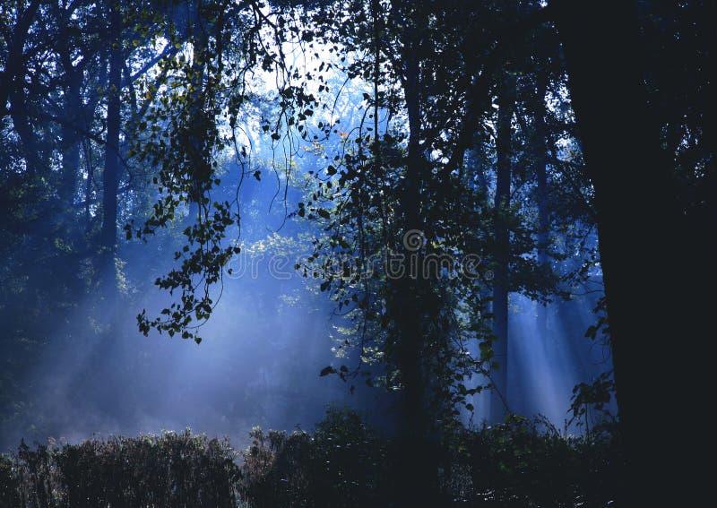 dramatyczna leśna mgła. zdjęcia stock