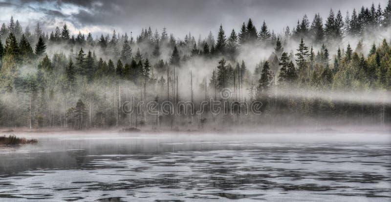 Dramatyczna mgła w lesie Wzdłuż jeziora fotografia stock