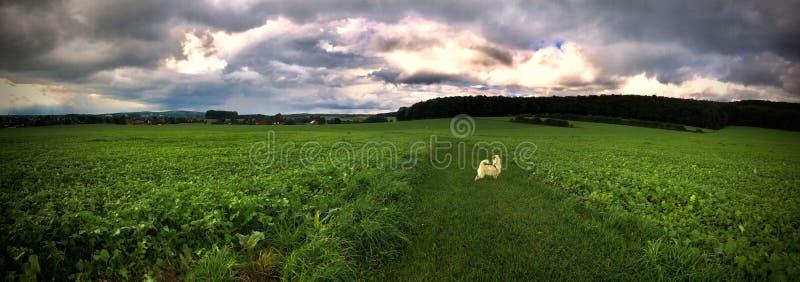 Dramatyczna panorama zmierzchu niebo nad ciemną płaską linią horyzontu obrazy royalty free