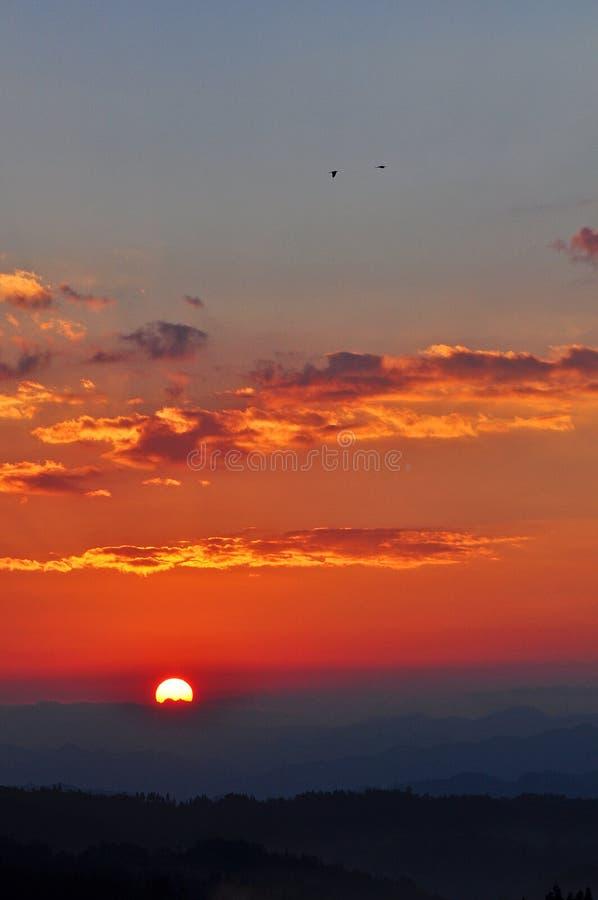 Dramatycznego ranku nieba Latający ptaki przy wschodem słońca zdjęcie royalty free