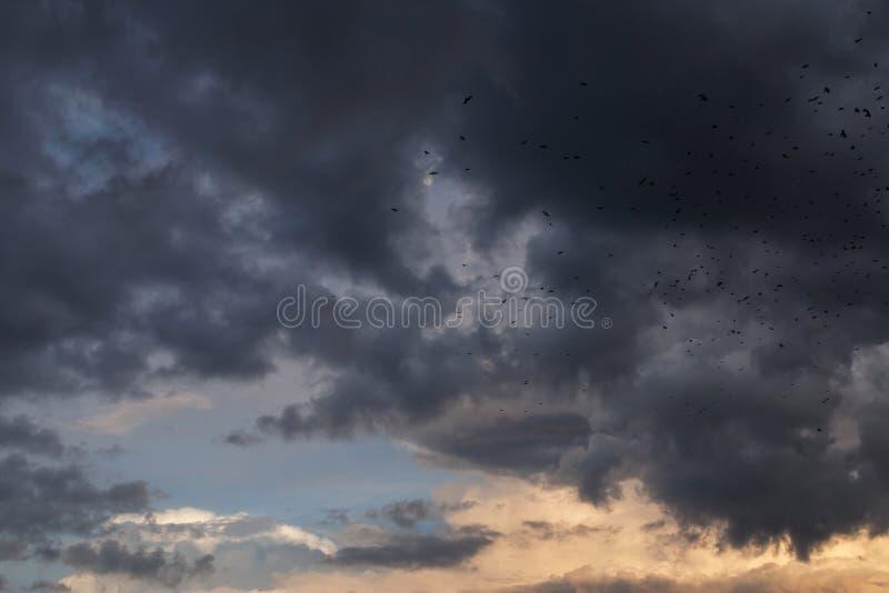 Dramatyczny burza zmrok chmurnieje z wiele ptakami w niebie zdjęcia stock