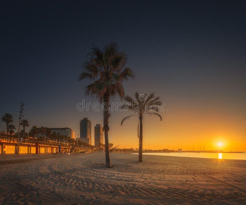 Dramatyczny sunrset na plaży Barcelona z palmą obrazy royalty free