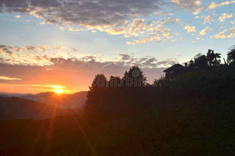 Dramatyczny wschodu słońca widok przy herbacianą plantacją obraz royalty free