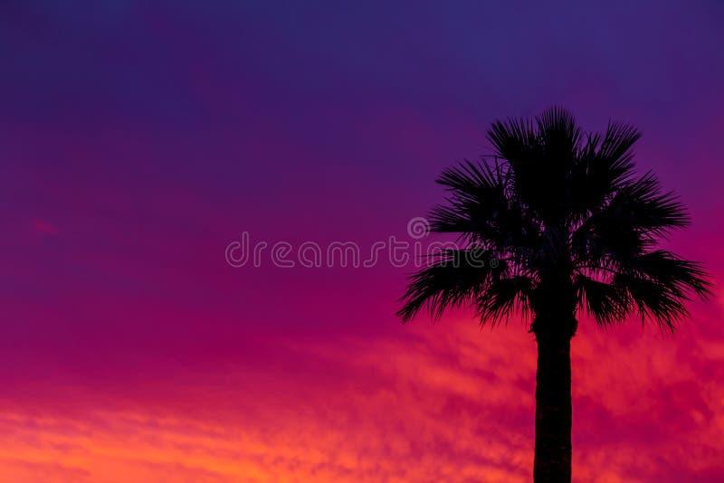 Dramatyczny zmierzch i wschodu słońca niebo z palmową sylwetką obraz royalty free
