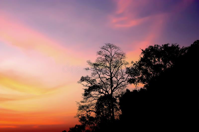 Dramatic atmosphere panorama view of silhouette plants. Dramatic atmosphere panorama view of silhouette plants on twilight sky background royalty free stock photo