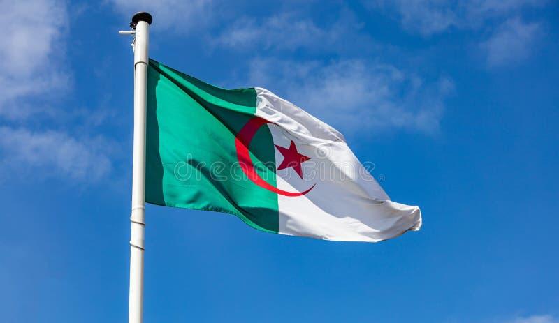 Drapeau algérien ondulant contre le ciel bleu clair photos libres de droits