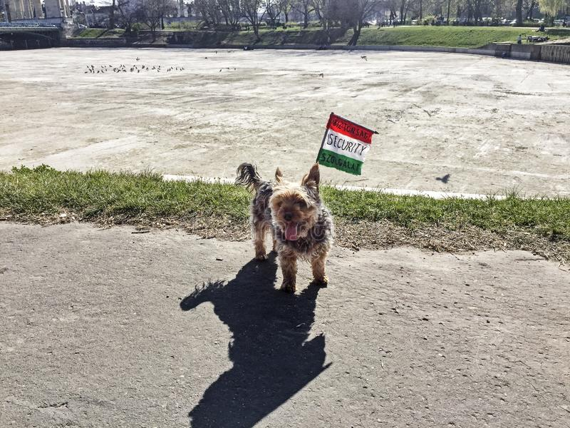 Drapeau de protection canin photographie stock libre de droits