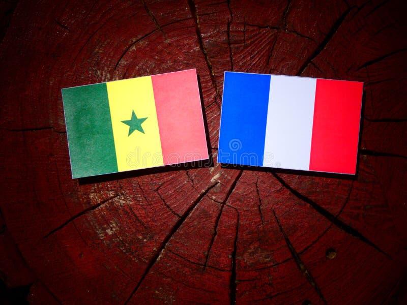 Drapeau du Sénégal avec le drapeau français sur un tronçon d'arbre d'isolement photographie stock