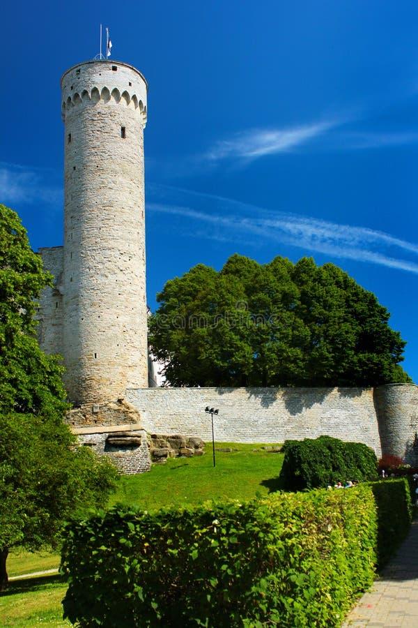 Drapeau estonien sur Hermann Tower grand sur la colline de Toompea à Tallinn, Estonie photo libre de droits