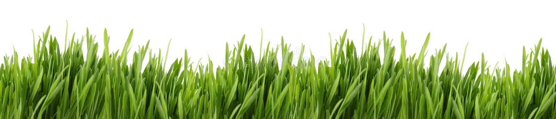 Drapeau grand d'herbe photographie stock libre de droits