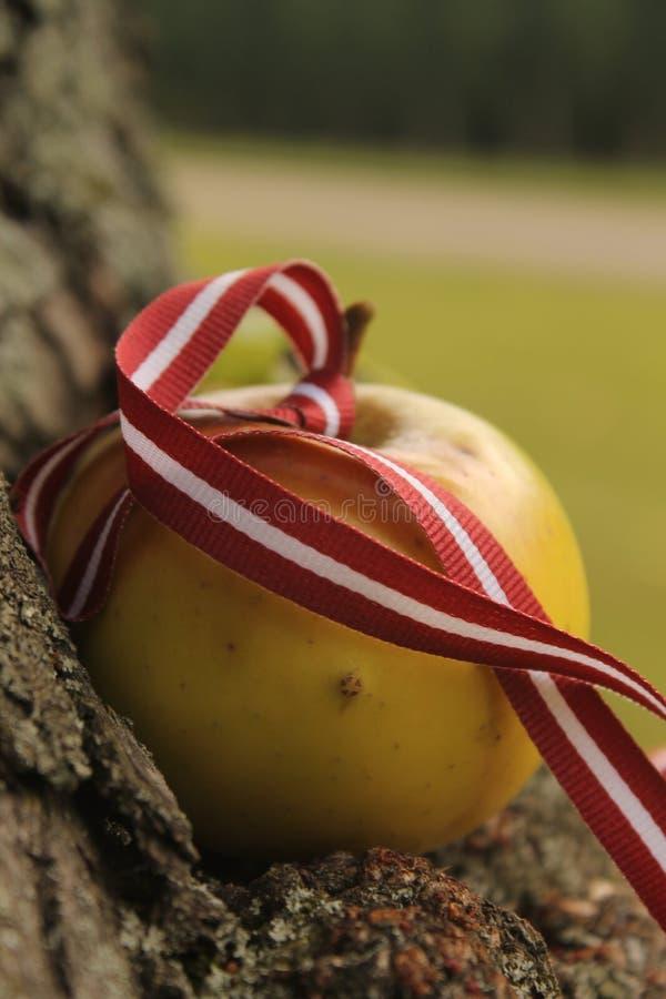 Drapeau letton avec la pomme en automne photos libres de droits