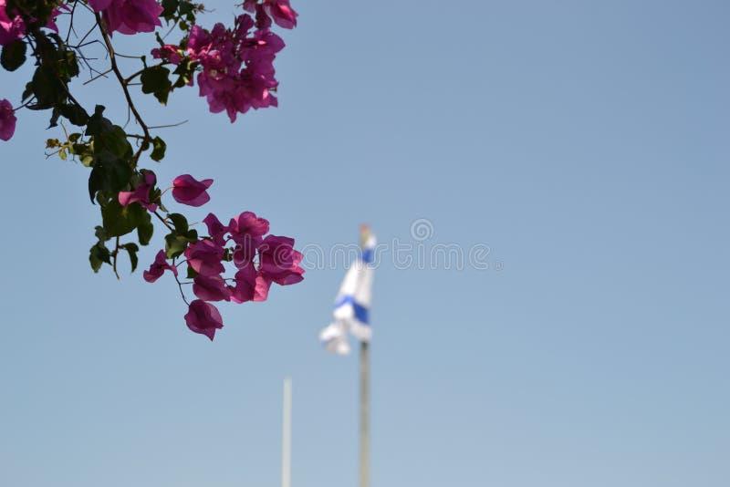Drapeau national israélien ondulant au bâti de l'olive à Jérusalem, Israël avec les feuilles colorées d'arbre dans l'avant photo libre de droits