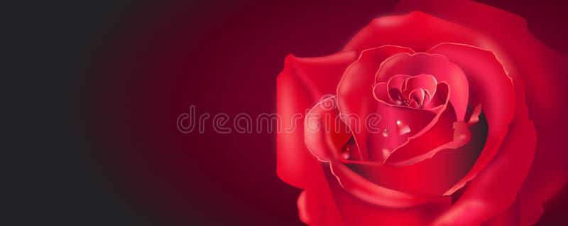 Drapeau rouge de Rose image libre de droits