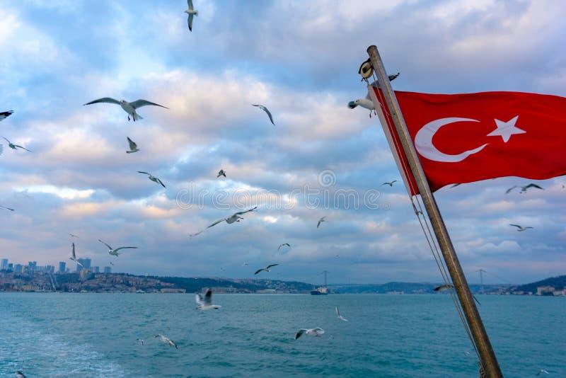 Drapeau turc de ondulation au-dessus de la mer avec le vol de mouettes image stock