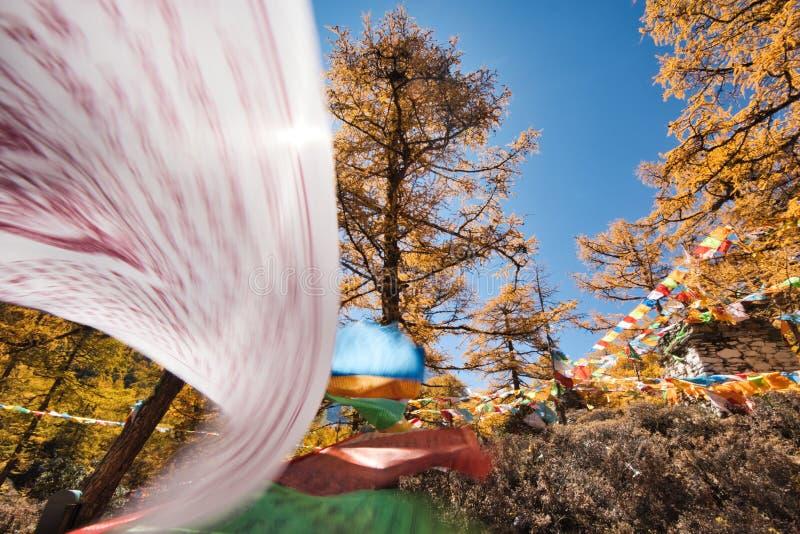 Drapeaux color?s de pri?re volant dans la for?t de pin d'automne avec le ciel bleu images stock