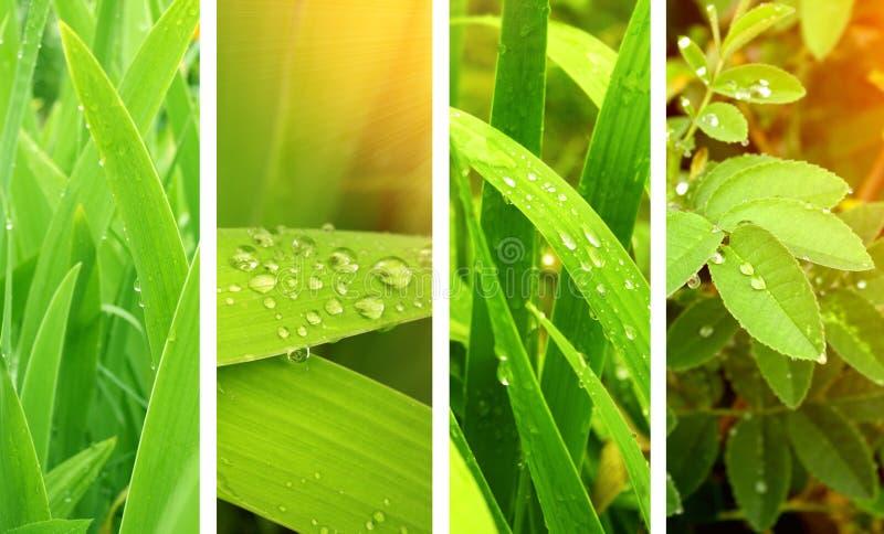 Drapeaux de nature photo stock