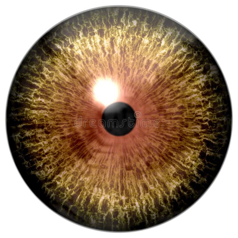 Drapieżnik przyrody gałka oczna, wilczy oko, zwierzęca gałka oczna, brąz, żółty oko z czarnym uczniem i biały tło,/ obraz stock