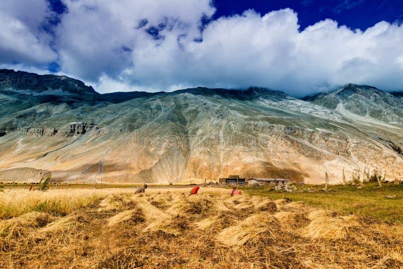 Drass by, Kargil, Ladakh, Jammu and Kashmir, Indien royaltyfri bild