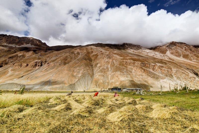 Drass by, Kargil, Ladakh, Jammu and Kashmir, Indien arkivbild