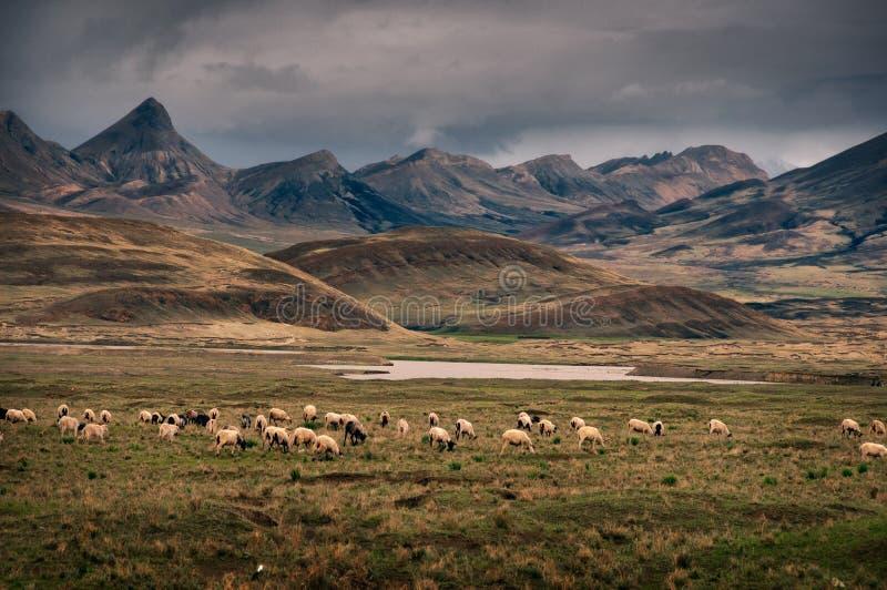 Drastische ländliche Berglandschaft mit Schafen im Vordergrund, Tibet lizenzfreie stockfotos