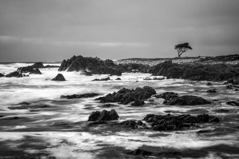 Drastische Ozean-Schwarzweiss-Bewegung auf Rocky Shore mit einzelnem Zypresse-Baum auf Horizont stockfotos