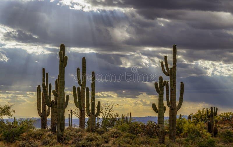 Drastische Sonnenstrahlen, die auf Saguaro-Kaktus auf Ridgline glänzen stockfotografie