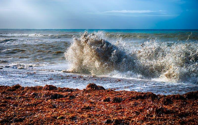 Drastische Szene Große Welle auf Seeküste stockbilder